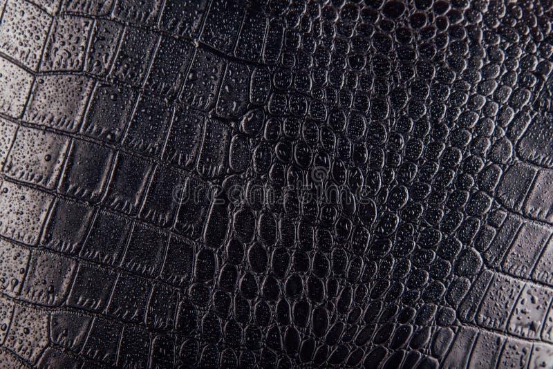 Krokodil- oder Schlangenhautlederhintergrund Schwarze Beschaffenheit umfasst mit Wassertropfen stockfotografie