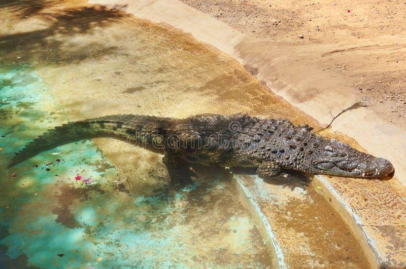 Krokodil in park bij de Kanarie van Tenerife stock foto's