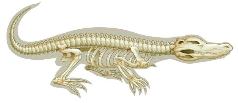 Krokodil skeletachtig systeem royalty-vrije illustratie