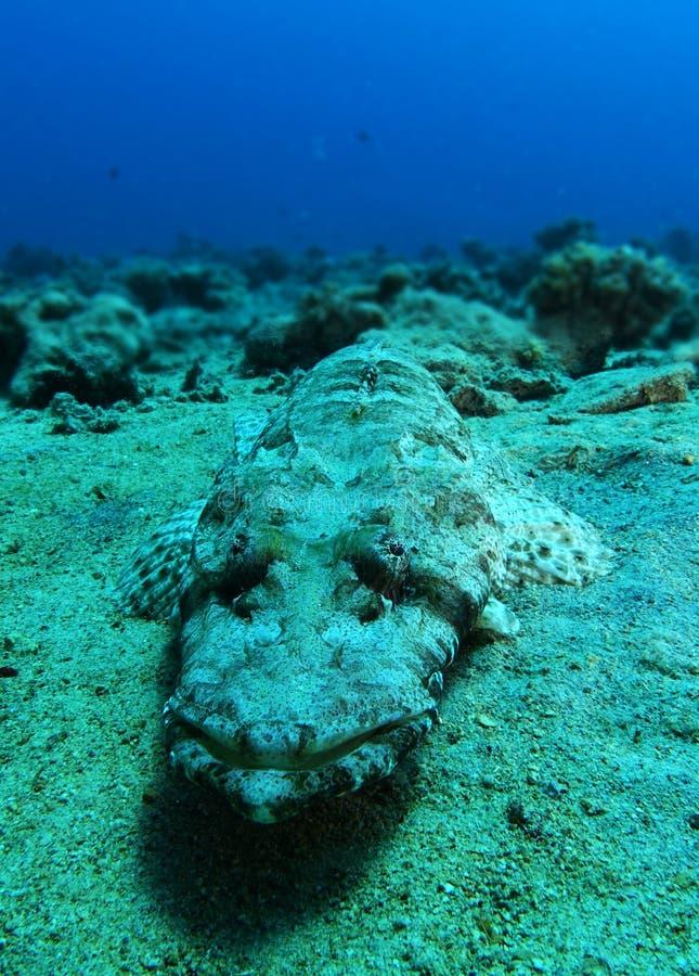 Krokodilfisksömn över sanden royaltyfri bild