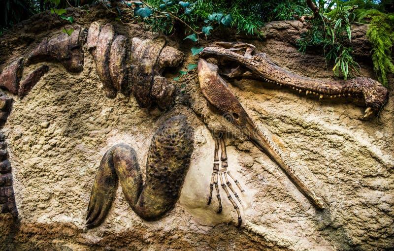 Krokodilfossil royaltyfri foto