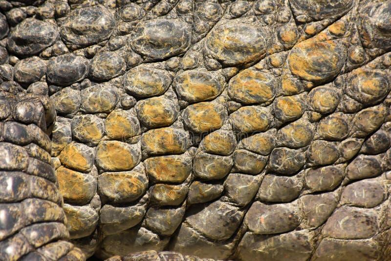 Krokodilhuid 2 stock foto