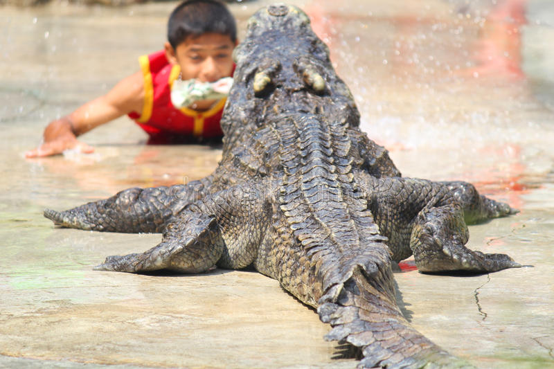 Krokodillandbouwbedrijf en dierentuin, Krokodillandbouwbedrijf Thailand royalty-vrije stock afbeeldingen