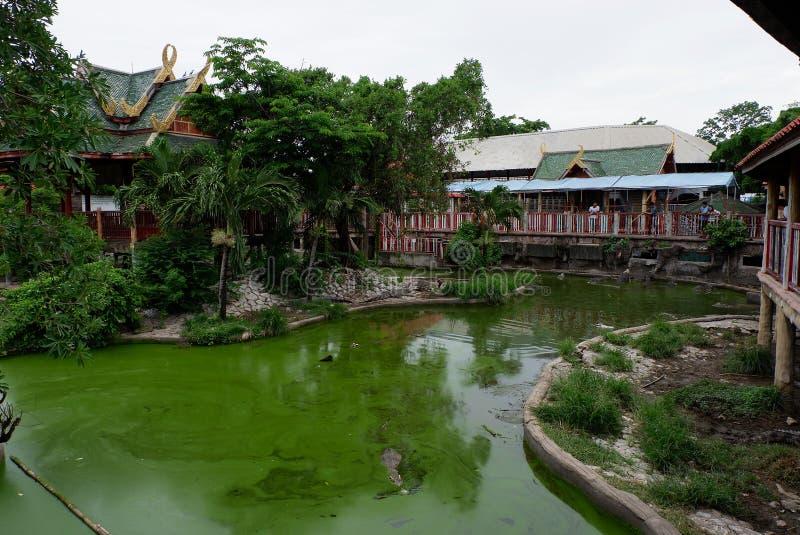 Krokodillandbouwbedrijf, Thailand stock fotografie