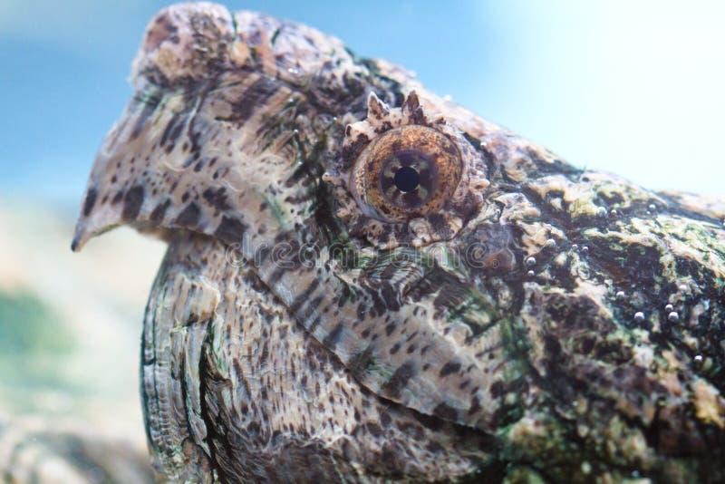 Krokodille Schildpad stock foto's