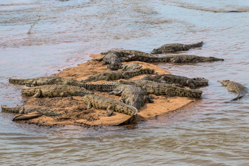 Krokodillen die in de Zon in het Nationale Park van Kruger zonnebaden royalty-vrije stock foto's