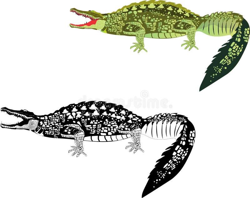 2 krokodillen op wit vector illustratie