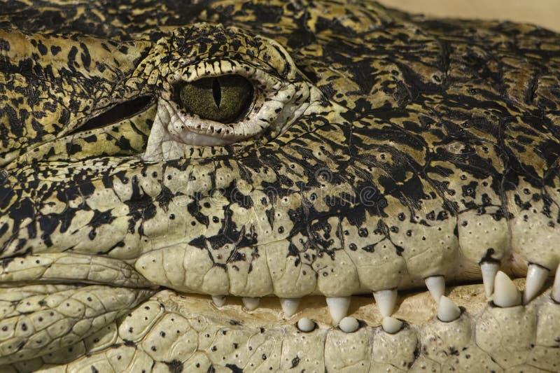 Krokodilleoog en tandendetail royalty-vrije stock fotografie