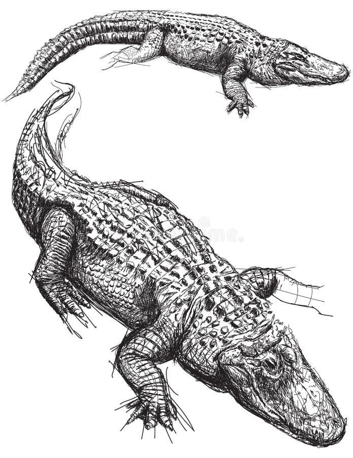 Krokodilleschetsen royalty-vrije illustratie