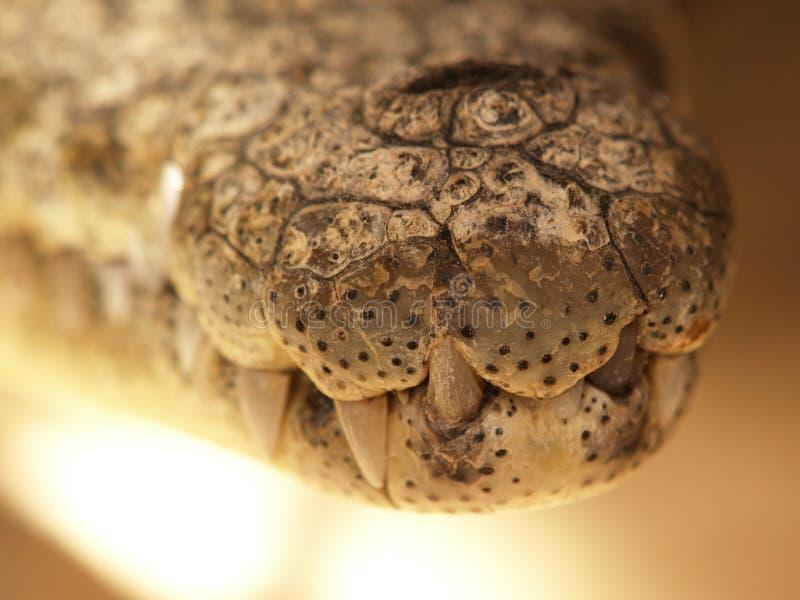 krokodilmun nile royaltyfri bild
