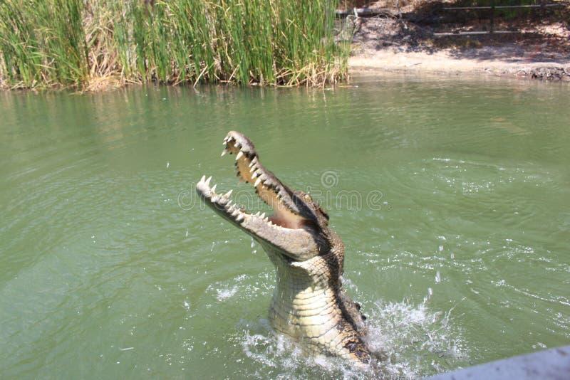 Krokodilpark stock fotografie