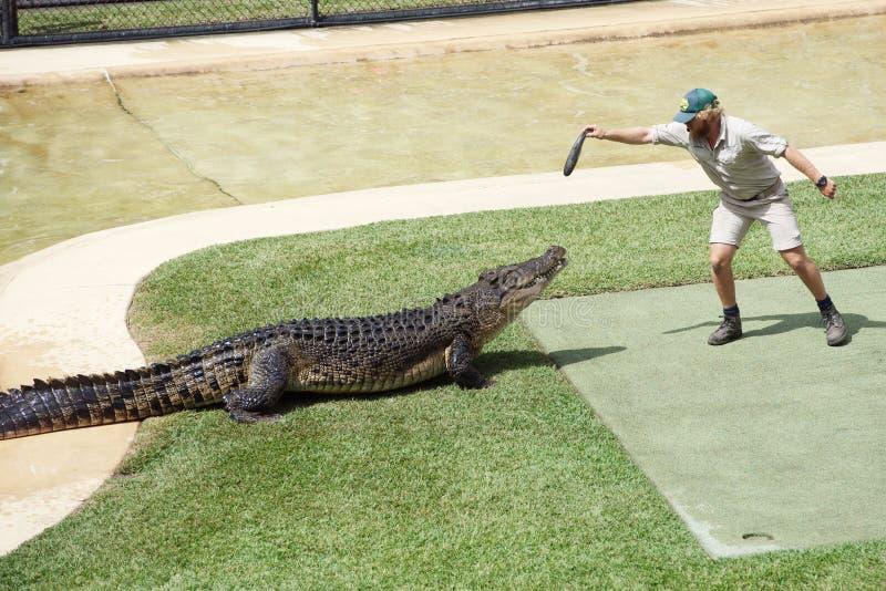 Krokodilshow, Australien-Zoo stockfotos