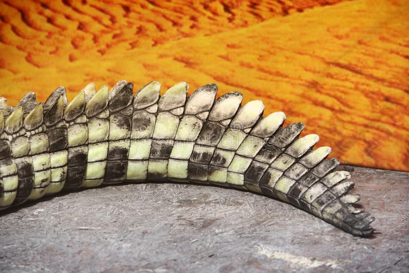 Krokodilsvansslut upp royaltyfri foto