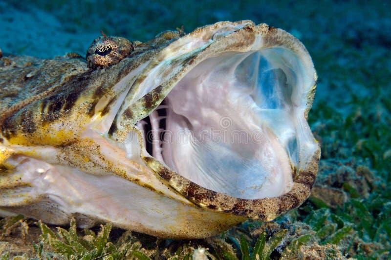 Krokodilvissen royalty-vrije stock fotografie