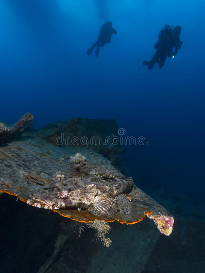 Krokodilvissen bij de SS Thistlegorm Schipbreuk stock afbeelding