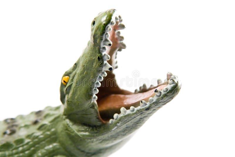 krokodyl otwierają szczęki zdjęcia royalty free