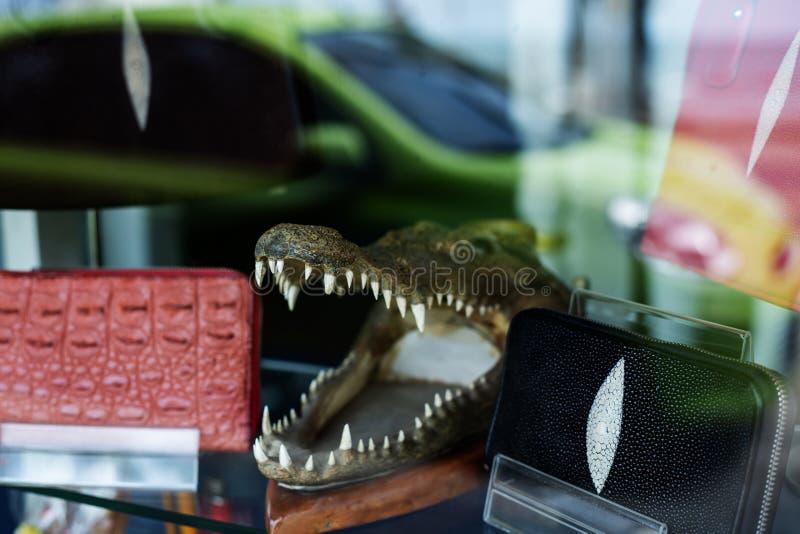 Krokodyl skóry portfle i krokodyl głowa obrazy stock