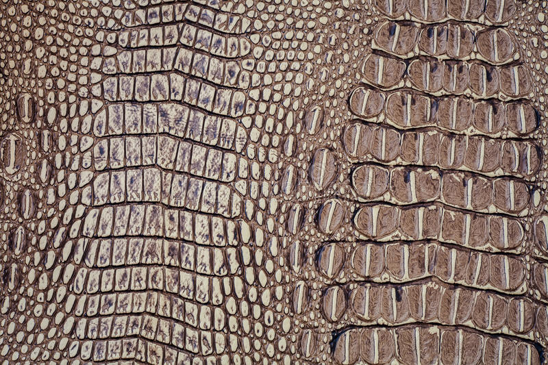 Krokodyl skóry tekstura zdjęcie royalty free