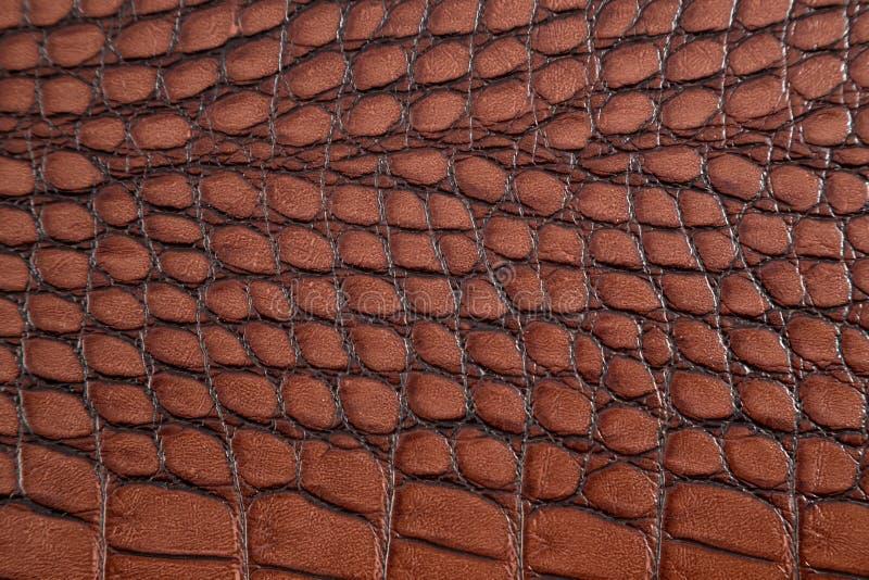 Krokodyl skóry tekstura zdjęcie stock