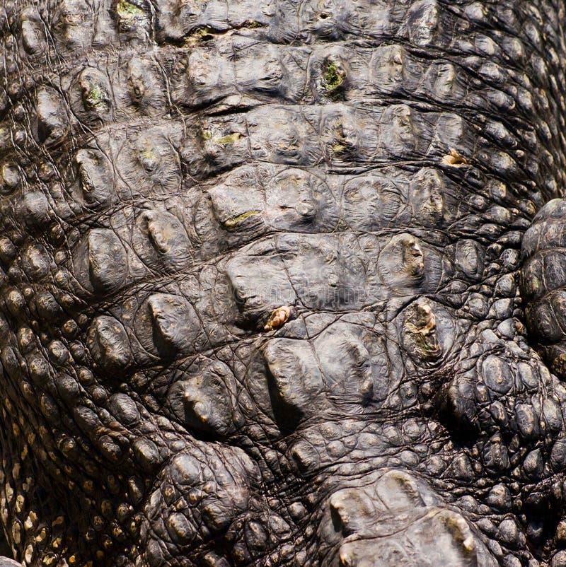 krokodyla skóry tekstura zdjęcie stock