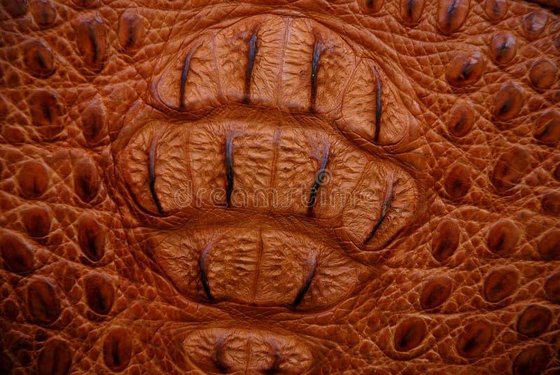 krokodyle konsystencja brown zdjęcie stock