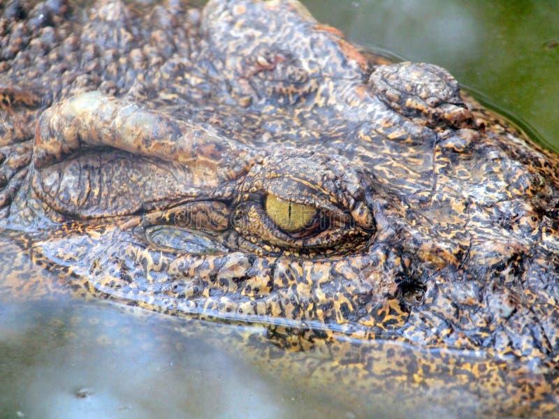 Krokodyli oczu szczeg?? zdjęcia stock