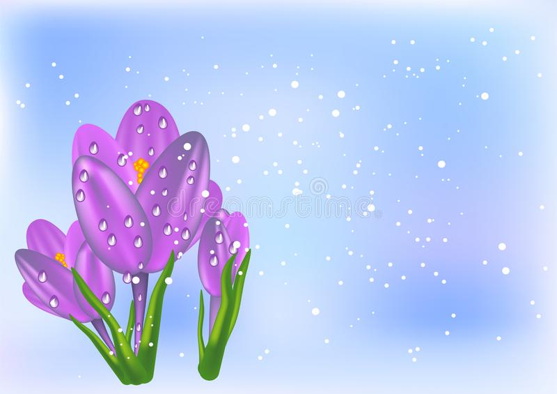 Krokus en sneeuw vector illustratie