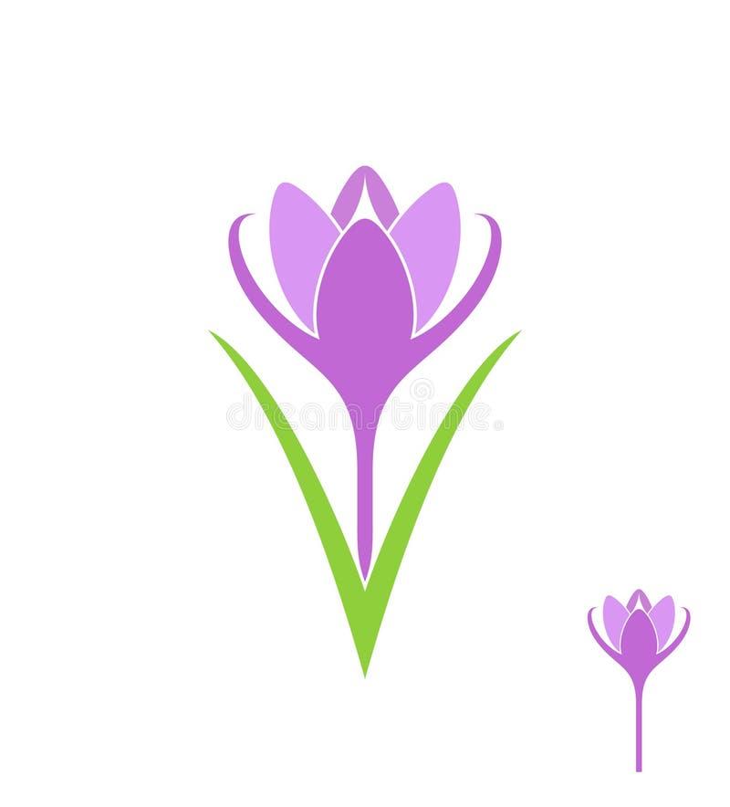 krokus Getrennte Blume auf weißem Hintergrund stock abbildung