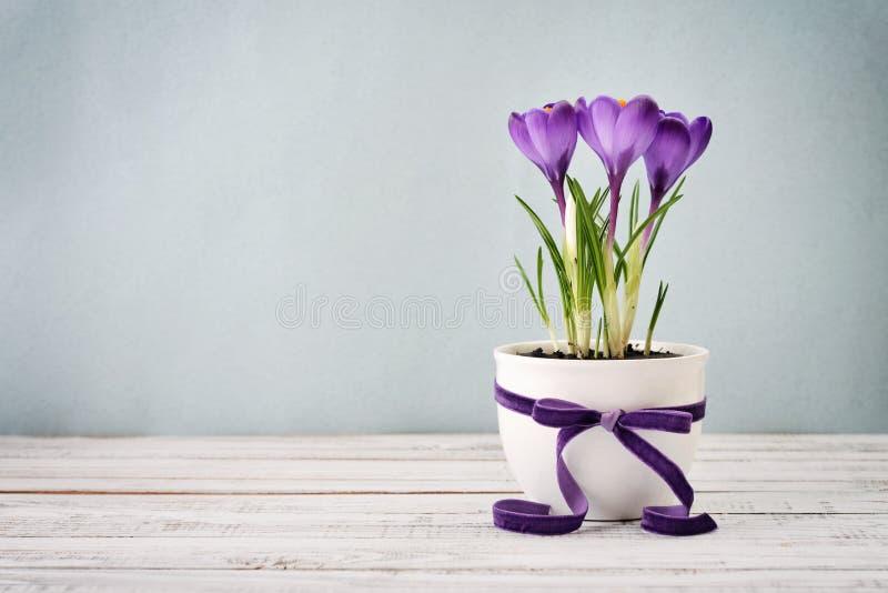 Krokus im Vase stockbild
