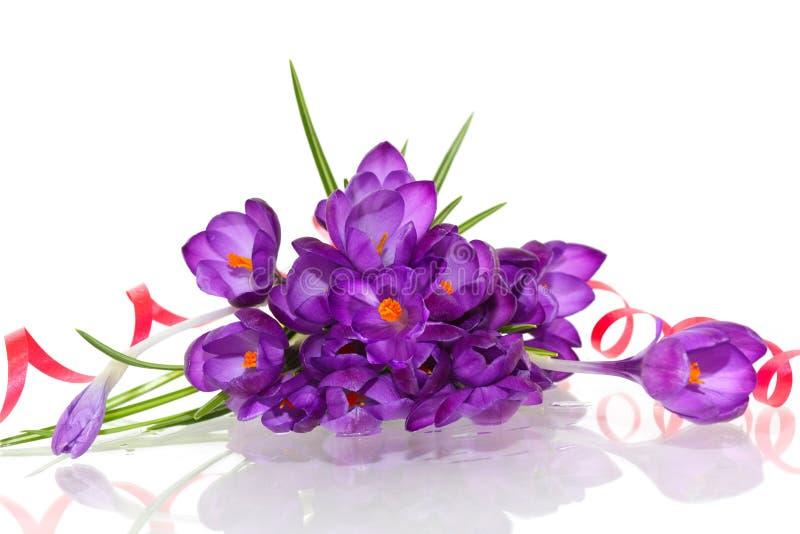 krokus purpury obrazy royalty free