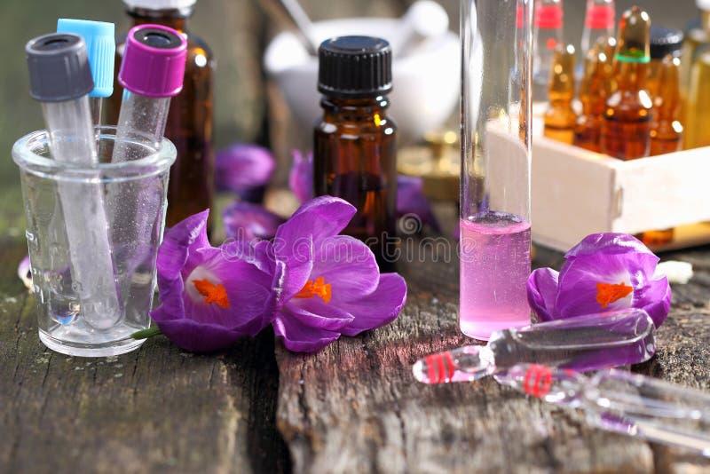 Krokusbloemen in het laboratorium stock afbeeldingen