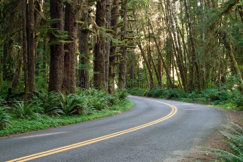 Kromme in de Weg Hoh Rain Forest Washington State stock foto's