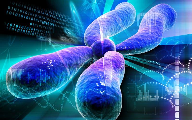 kromosom stock illustrationer