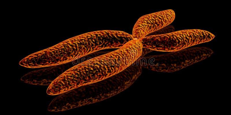 Kromosom royaltyfria foton