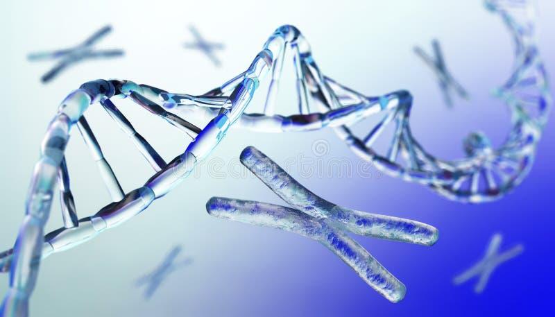 Kromosom DNA arkivbild
