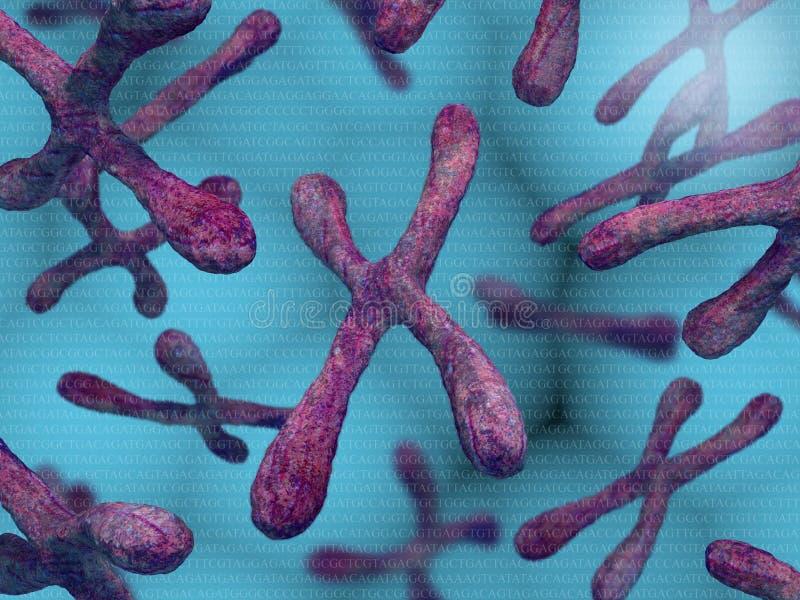 kromosomer royaltyfri illustrationer