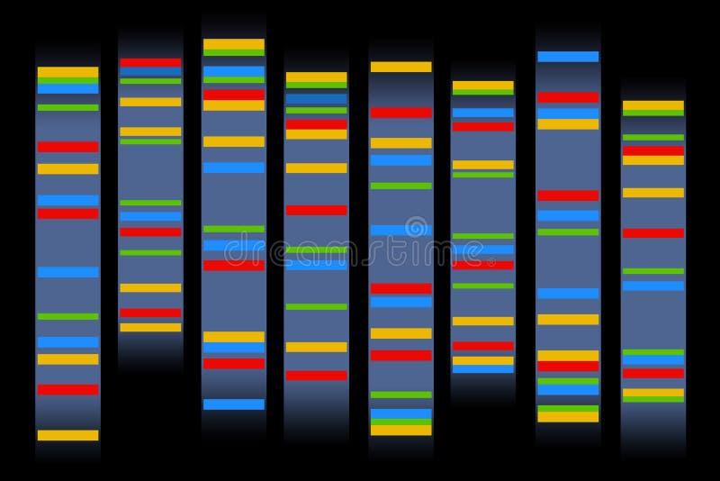 Kromosomer stock illustrationer