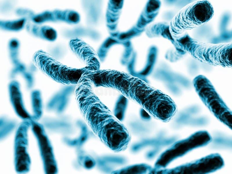 Kromosomer x vektor illustrationer