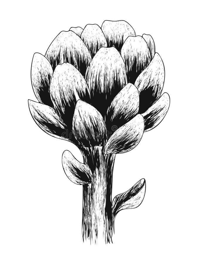 Kronärtskockablomma Ny organisk sund mat Svart skissar grönsaken som isoleras på vit bakgrund Design för hälsa och skönhet stock illustrationer