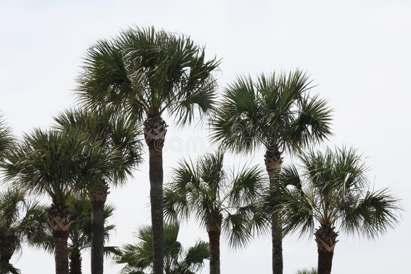 Krona av palmträden royaltyfri foto