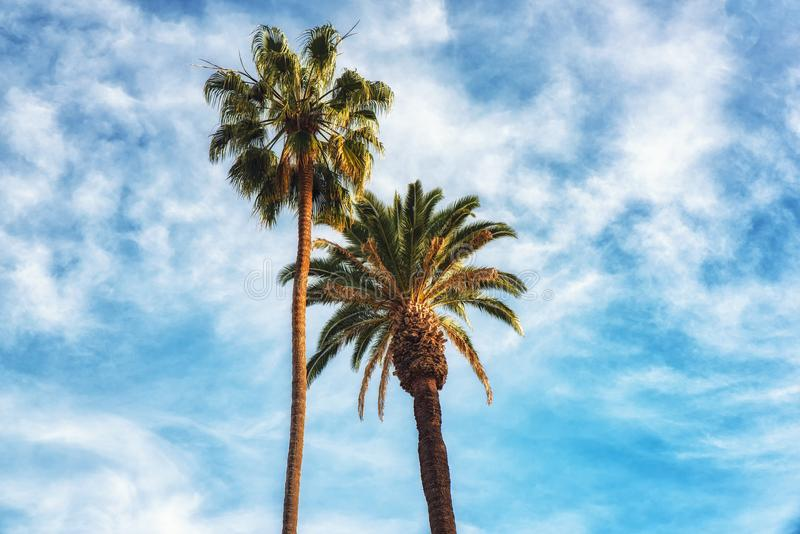 Krona-gillade palmträd för rodeodrev Beverly Hills Captivating royaltyfri foto