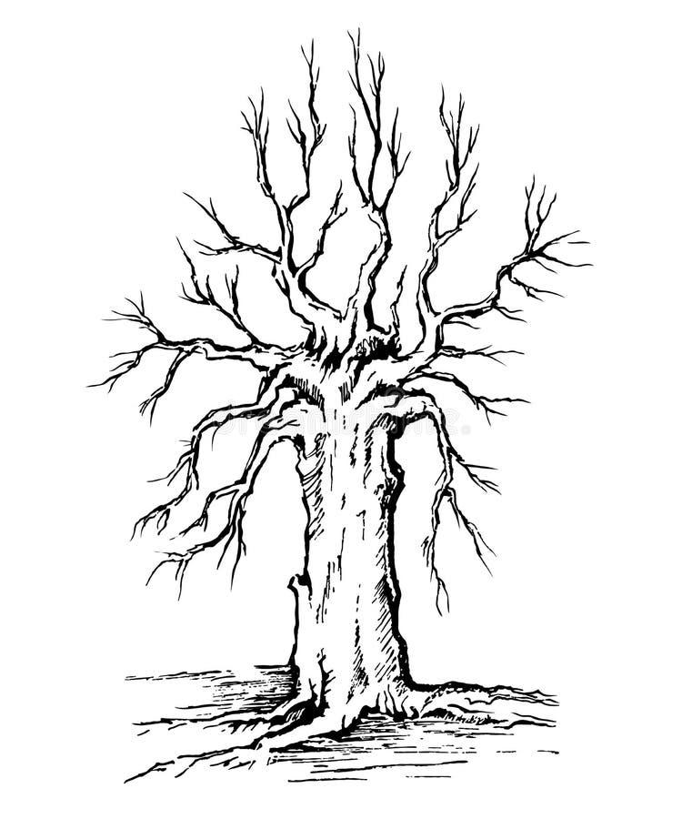Krona und Stamm eines Baums ohne Blätter vektor abbildung