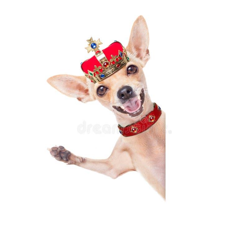 Kronakonunghund arkivbilder