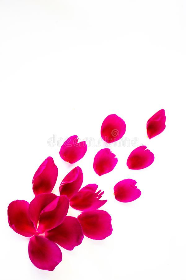 Kronblad av den rosa pionen, av olika former och format P? en vit bakgrund arkivbild