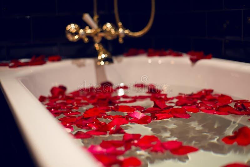 Kronblad av röda rosor i ett vitt badrum med svarta tegelplattor royaltyfria bilder