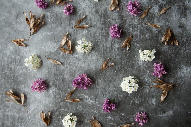 Kronblad för blommaknoppar i en spridning på en grå abstrakt bakgrund Grått dystert cementgolv Purpurfärgad och vit blom arkivfoto