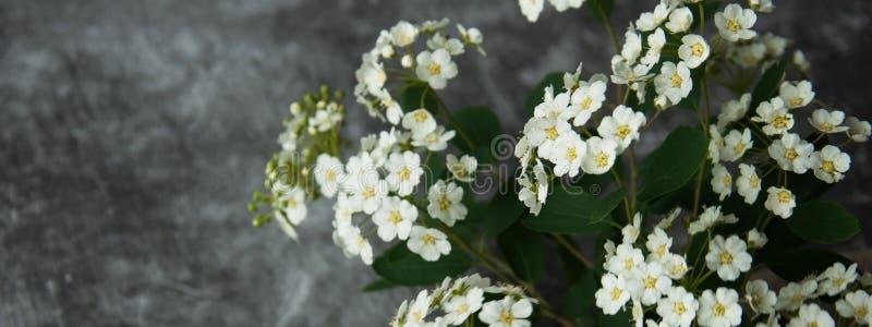 Kronblad för blommaknoppar i en spridning på en grå abstrakt bakgrund Grått dystert cementgolv Vit blom fotografering för bildbyråer