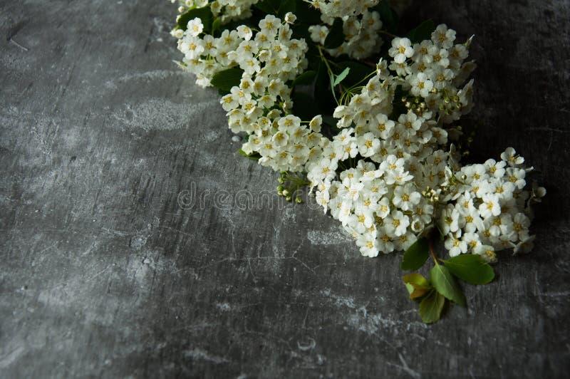 Kronblad för blommaknoppar i en spridning på en grå abstrakt bakgrund Grått dystert cementgolv Vit blom arkivfoto