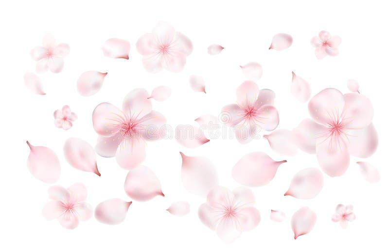 Kronblad och blommor av en blomning fjädrar trädet Körsbär, körsbär eller Apple blommor Realistisk vektor stock illustrationer