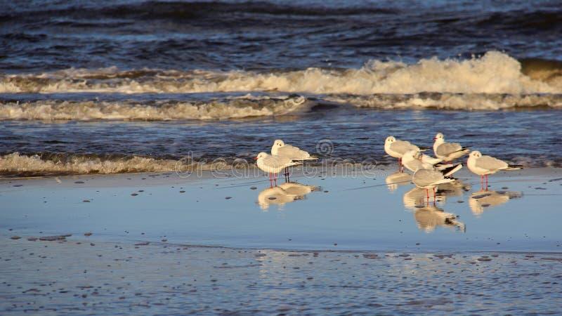 Krone des Seemöwen-Stands auf Küste Glück-Freiheit und leichte Art des Lebens stockfoto